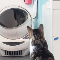 Four Reasons Cat Owners Should Consider an Automatic Litter Box
